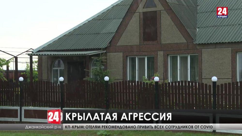 В Крыму нашествие комаров