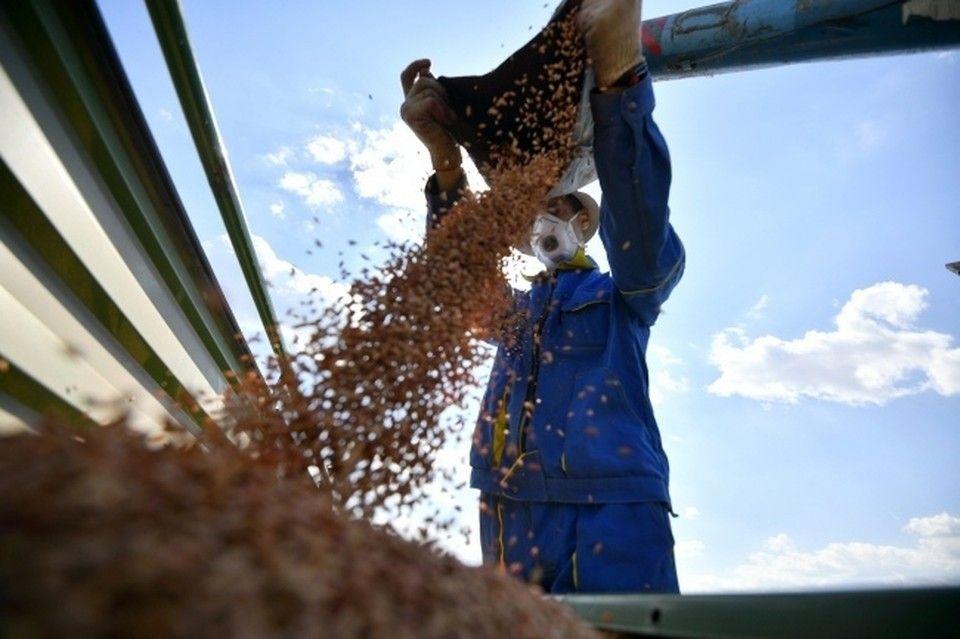 После потопа в Крыму приостановлен сбор урожая зерна