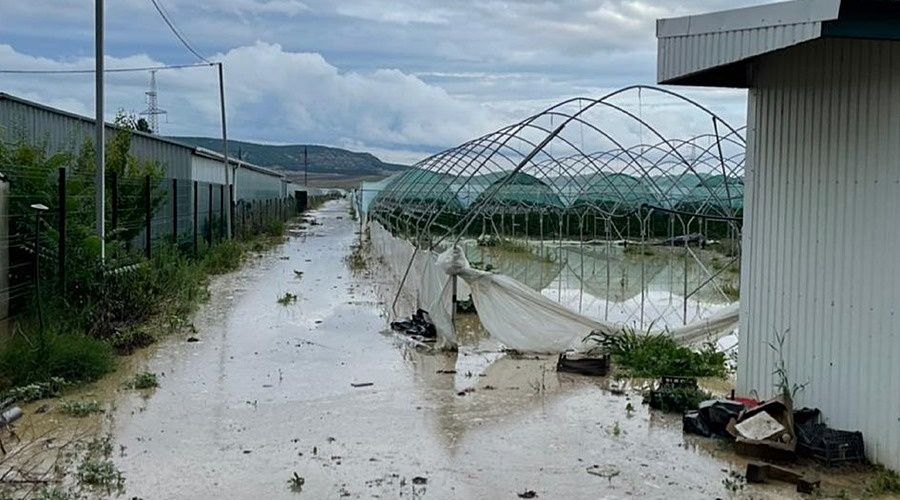 Знаменитую крымскую клубнику и лаванду затопило во время паводка