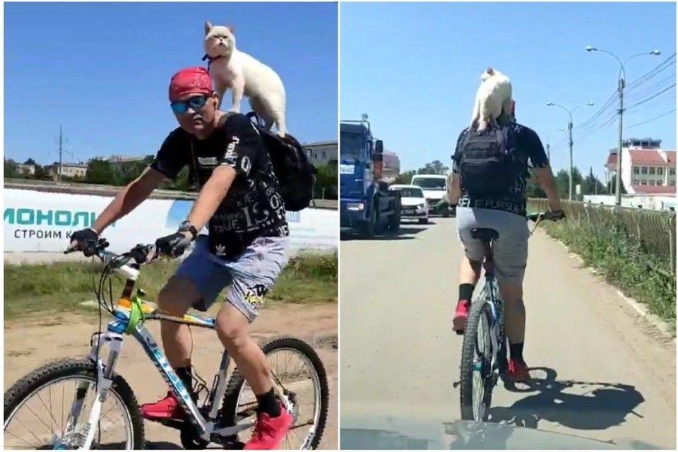 Кот-велосипедист в Симферополе умилил автолюбителей
