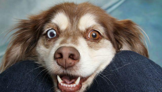 Чтобы пес жил долго: что нужно знать хозяину - кинолог