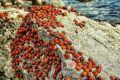 Нашествие божьих коровок: Почему пляжи Крыма облюбовали стаи насекомых