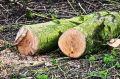 В Бахчисарайском районе мужчина повредил деревья и кустарники, теперь ему может грозить до 7 лет тюрьмы