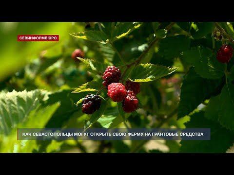 Как севастопольцы могут открыть свою ферму на грантовые средства