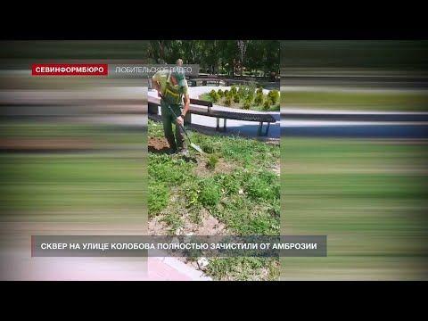В Севастополе ещё один сквер зачистили от амброзии