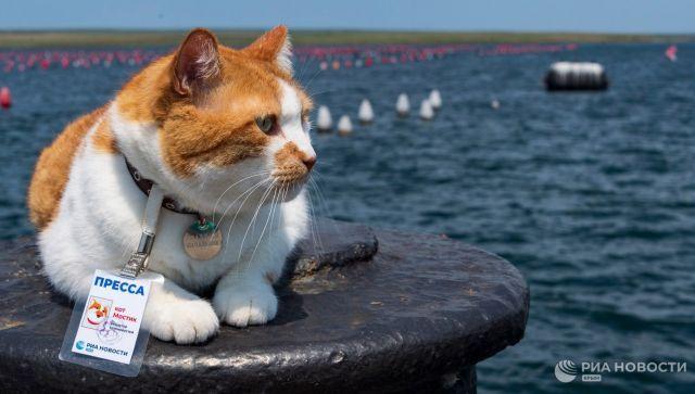 Кот Мостик стал экспертом в производстве крымских устриц