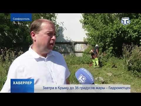 Борьба с амброзией началась в крымской столице