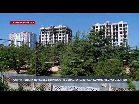 Сотни редких деревьев вырубают в Севастополе ради коммерческого жилья