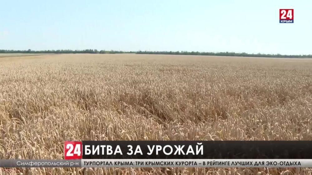 В Крыму пик уборки зерновых. Какие перспективы у аграриев?