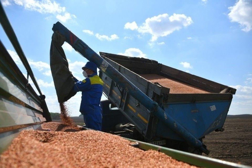 Крымские аграрии собрали 824 тысячи тонн зерна