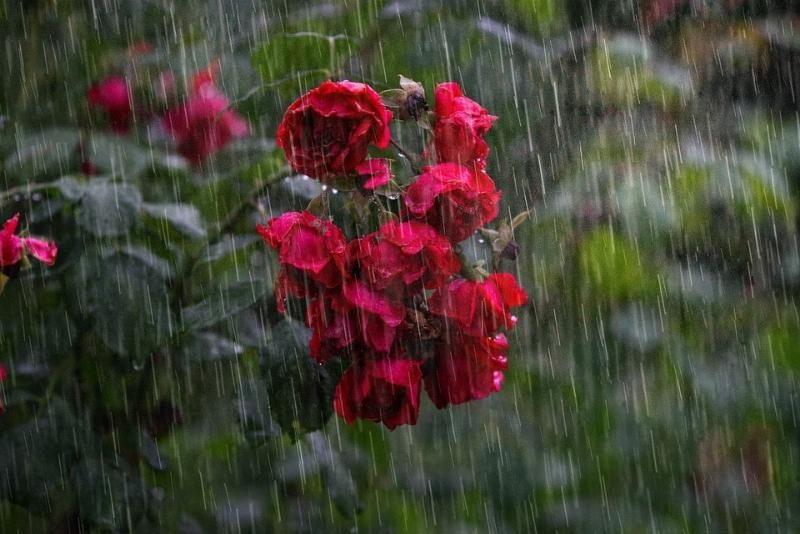 Прогноз погоды на 22 июля: в Крыму и Севастополе дожди, местами сильные