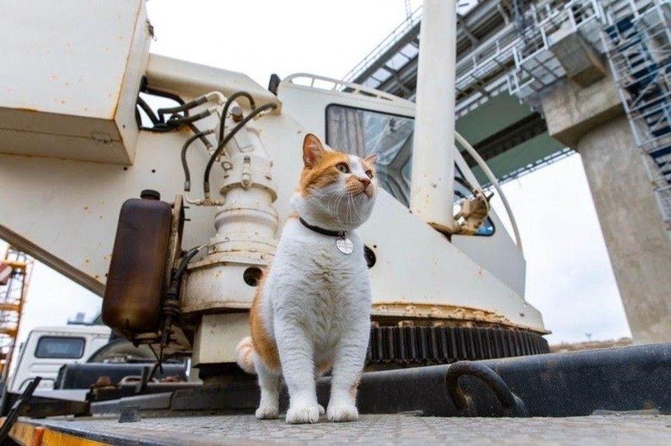 Кот Мостик и античные коты: Символ «стройки века» нашел коллег в Херсонесе