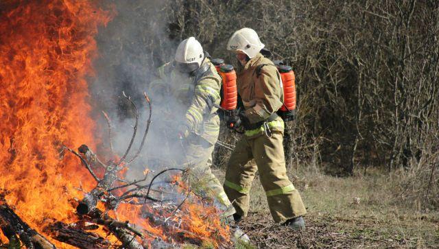 В Крыму продлили запрет на посещения лесов