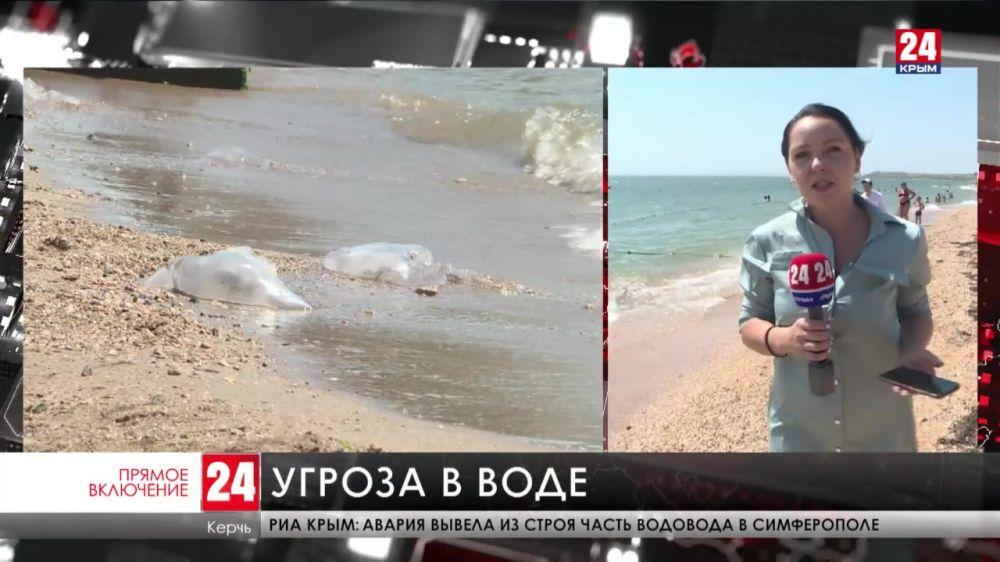 Побережье Азовского и Чёрного морей в Керчи атаковали медузы