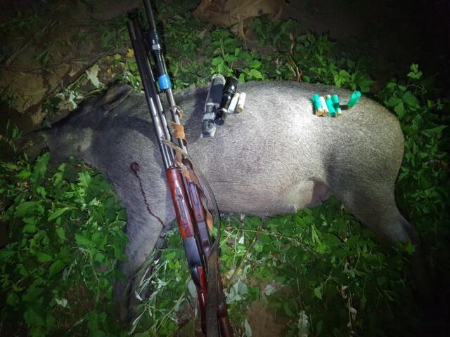 Браконьеры убили дикого кабана в Бахчисарайском районе