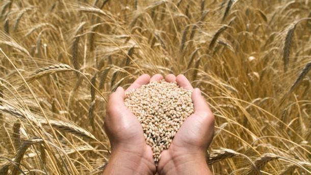 Протравители семян: разновидности и особенности использования