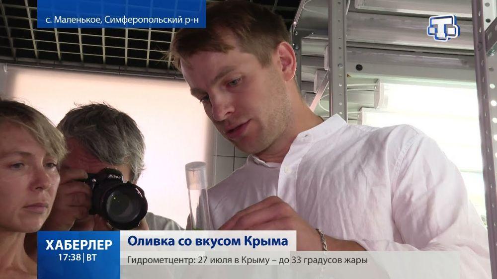 Крымские оливки будут участвовать в конкурсе «Вкусы России»