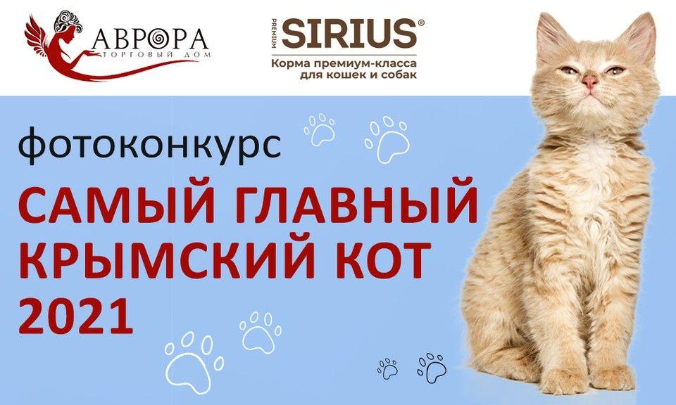 «Комсомолка» запускает фотоконкурс «Самый главный крымский кот 2021»