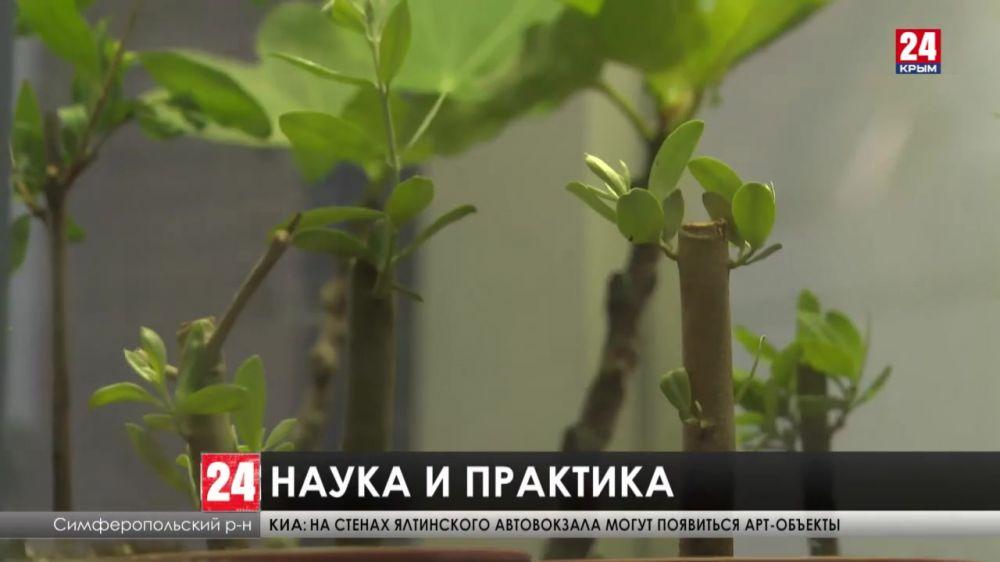 Крымская оливка. Новый крымский бренд поборется за победу в национальном конкурсе «Вкусах России»