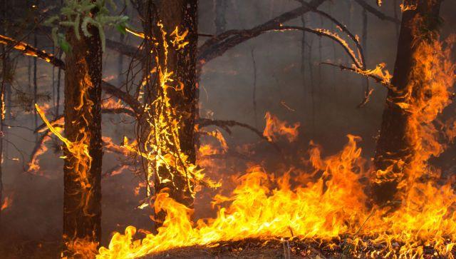 Жуткий лесной пожар в Турции подбирается к курортам