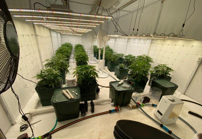 В Кировском районе полицейские пресекли факт культивирования наркосодержащих растений