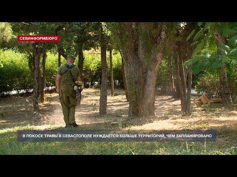 «Нет!» амброзии и борщевику: в Нахимовском районе продолжается покос травы
