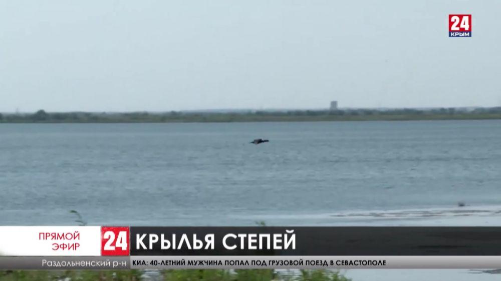 На севере Крыма отмечается рост популяции пернатых