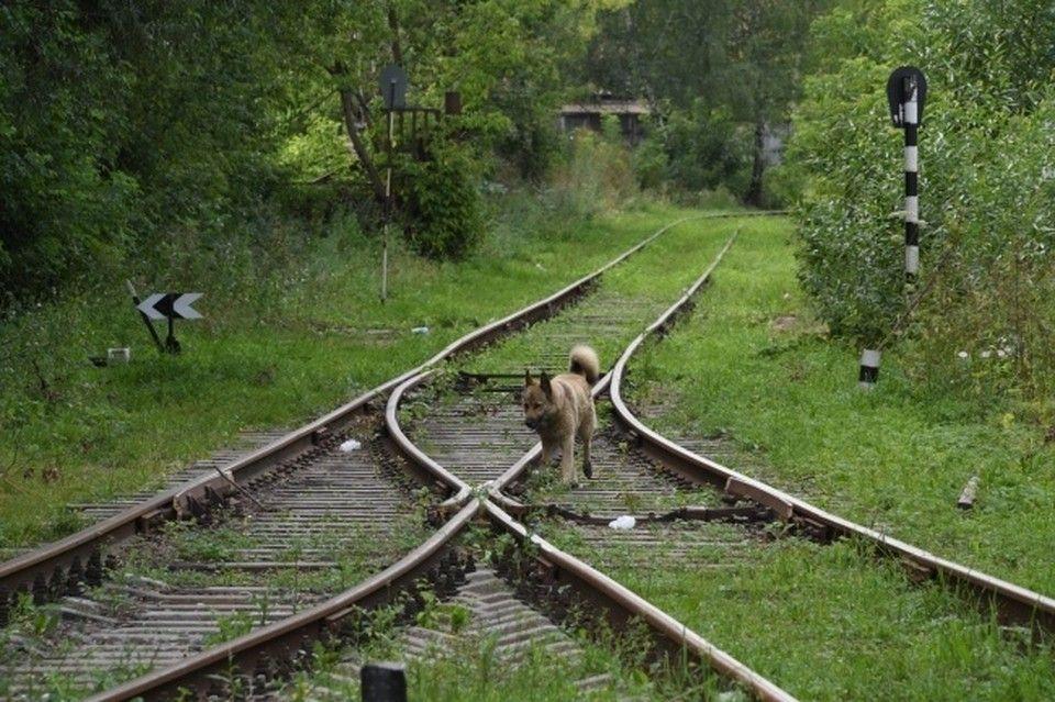 Грузовой поезд в Симферопольском районе сбил мужчину
