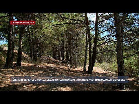 Деньги зелёного фонда Севастополя теперь пойдут и на переучёт имеющихся деревьев