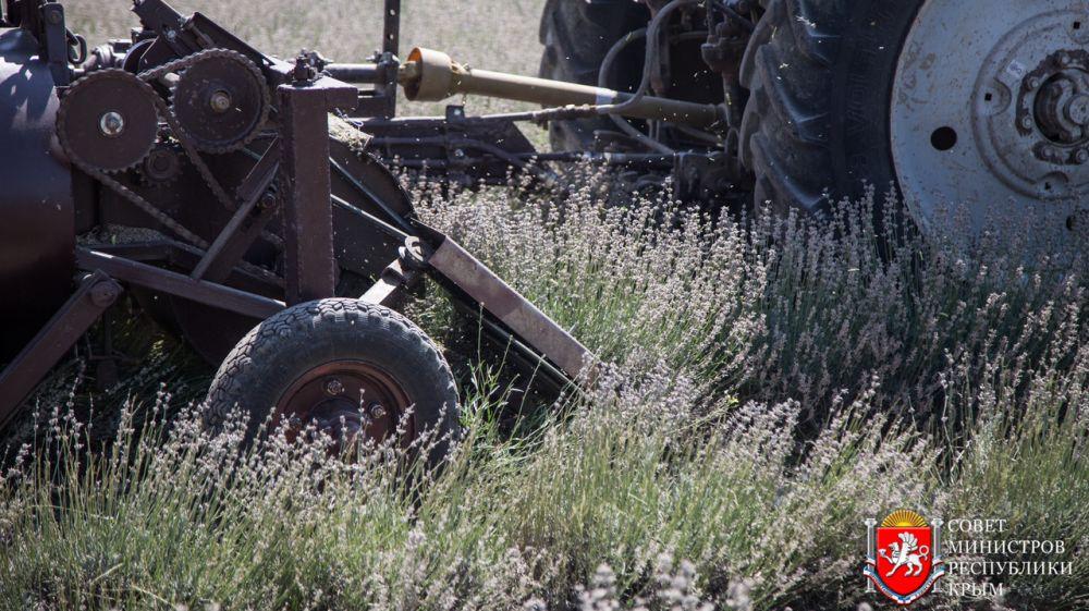 Эфиромасличная отрасль в Крыму возрождается и набирает силу