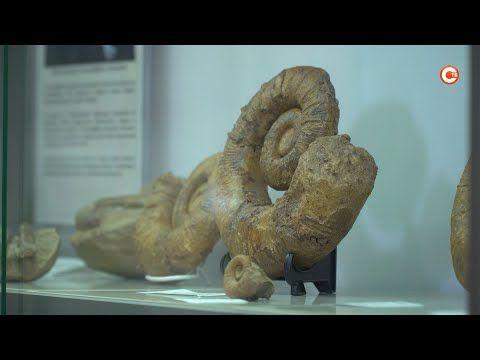 Севастопольская семья открыла музей окаменелостей Крыма (СЮЖЕТ)