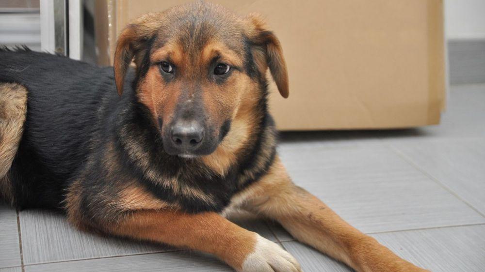 Специалистами отдела ветеринарии г. Керчь и Ленинского района проведена выездная проверка содержания домашних животных (собак) в г. Керчь