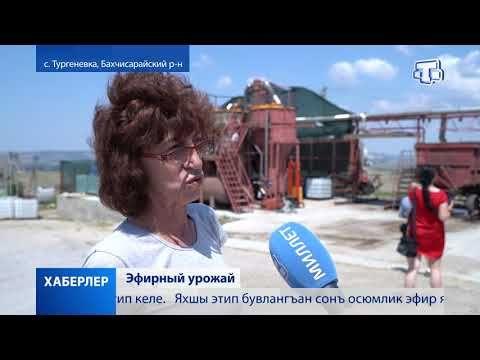Развитие эфиромасличной отрасли в Крыму