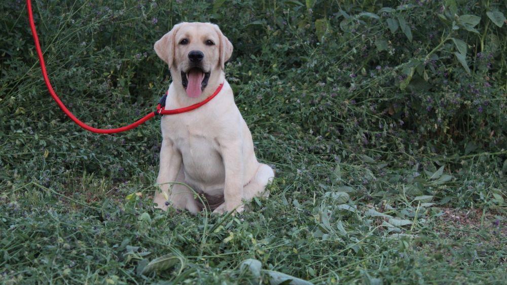 Специалистами отдела ветеринарии «Северный» проведена выездная проверка по вопросу обращения и содержания домашних животных в Джанкойском районе