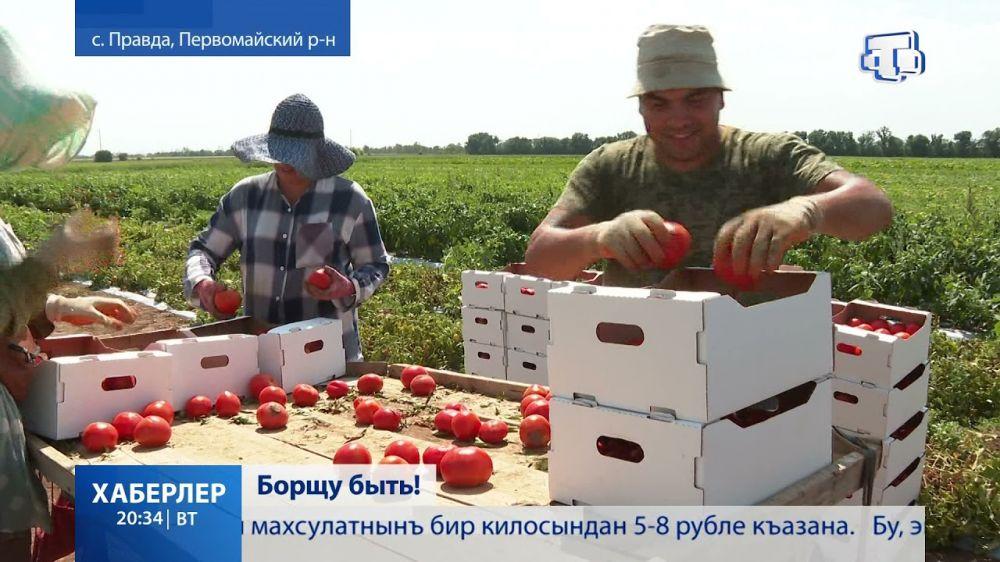 На крымских полях собирают овощи