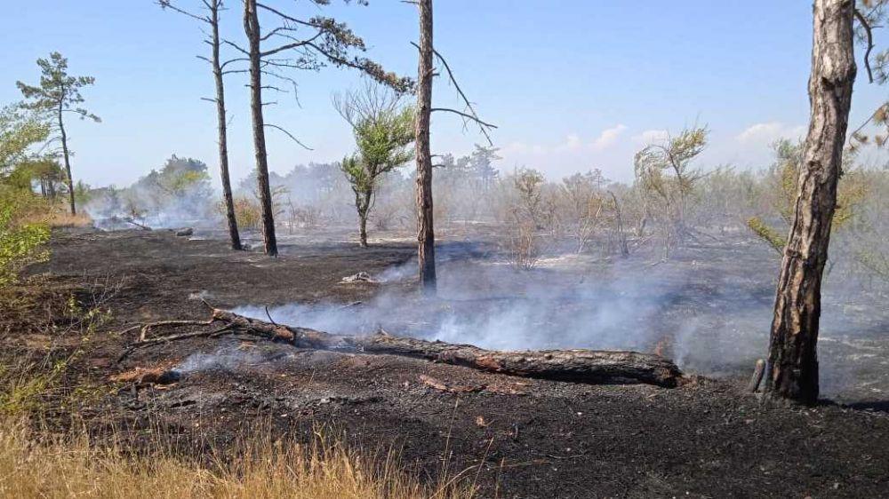 Сергей Садаклиев: Ежедневно спасателям приходится ликвидировать 8-10 возгораний сухой растительности