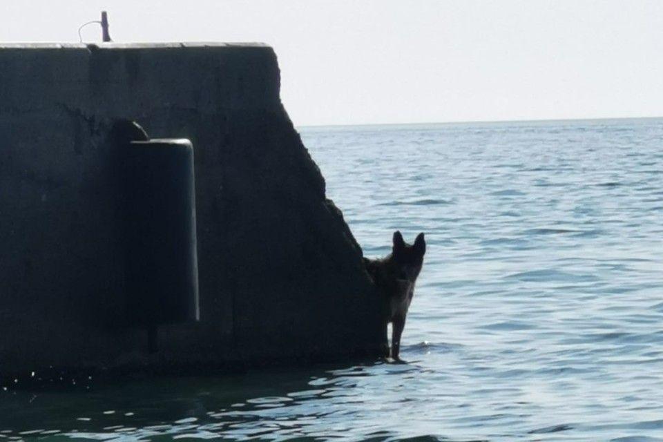 «Днем - спасатель, вечером - артист»: Поющий Мухтар из Ялты занялся плаванием