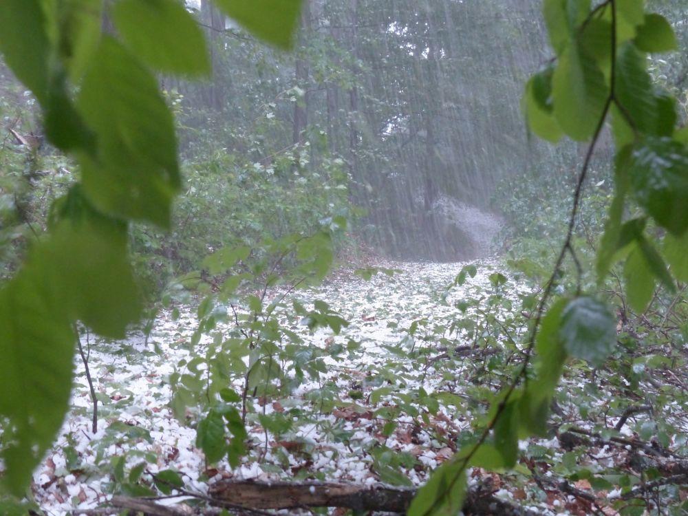 Какую погоду ждать крымчанам в среду
