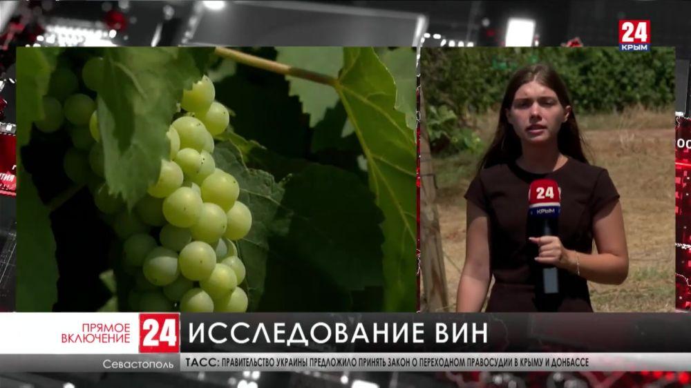 В Севастополе эксперты Роскачества проводят аудит винодельческих хозяйств