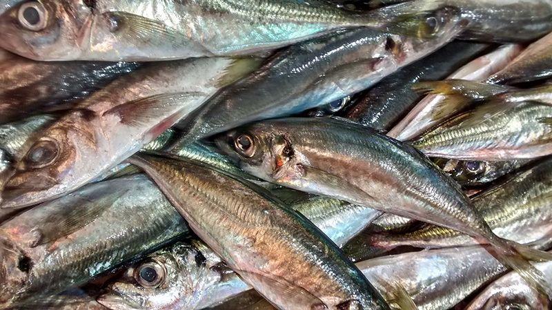 В Севастополе поймали браконьера, рыбачившего у мыса Айя