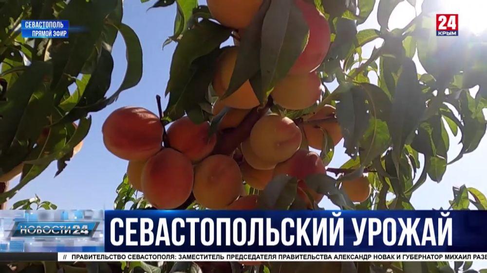 Как будут развивать сельское хозяйство в Севастополе?