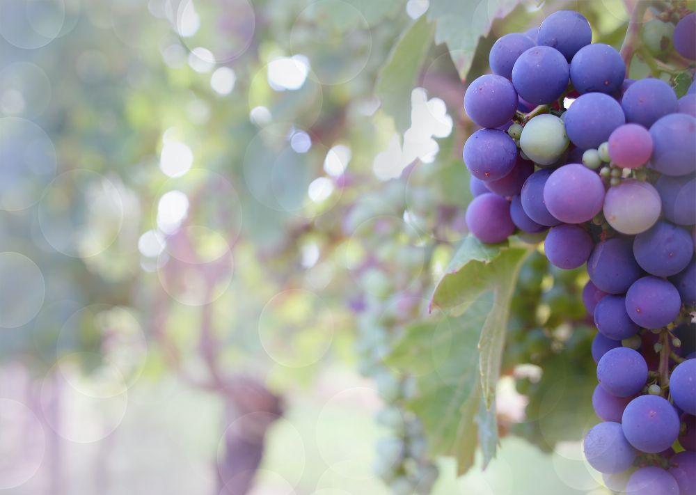 В этом году могут появиться новые виды севастопольской винной продукции
