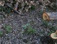 Под Севастополем вырубают деревья