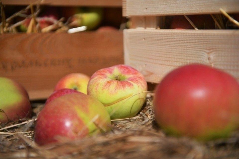Крымские яблоки премиум-сортов поставляют от Мурманска до Дальнего Востока