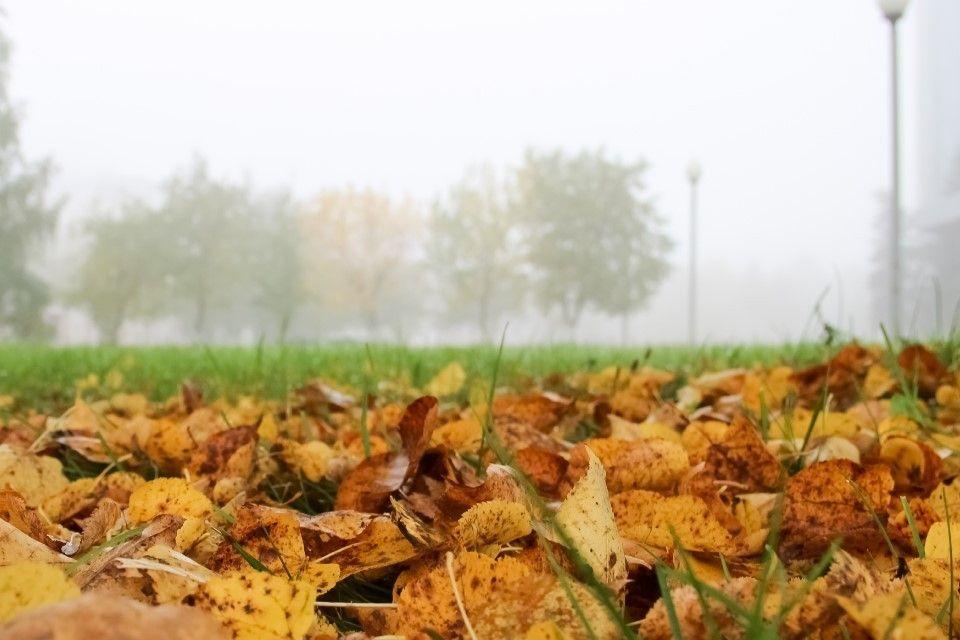 В конце недели в Крым придут дожди и похолодание – синоптики