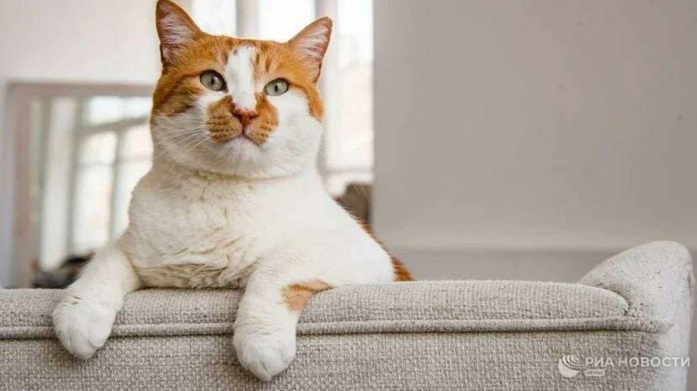 Шерсть, камни и пули: что подарили коту Мостику и почему