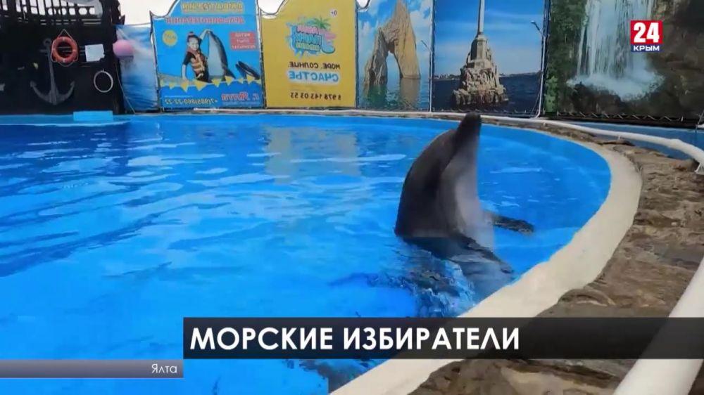 Дельфины выбирают. В Крыму морские обитатели предсказали исход голосования. Какая партия победит?