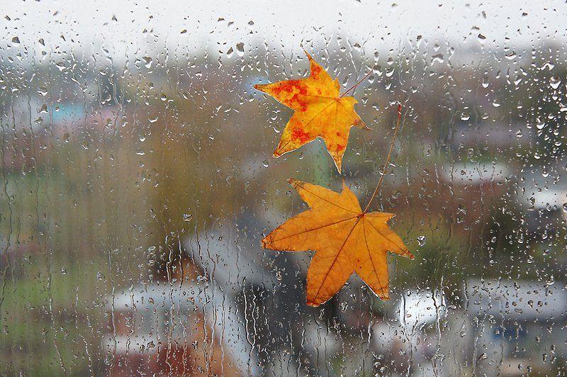 Прогноз погоды на 20 сентября: в Крыму и Севастополе дождливо и прохладно