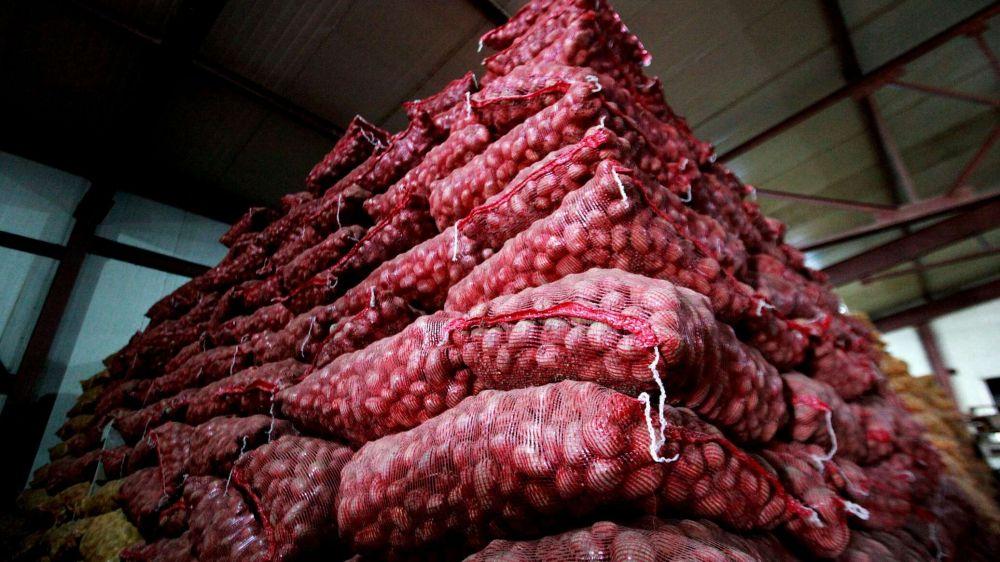 Впервые в истории: Белоруссия стала импортером картофеля