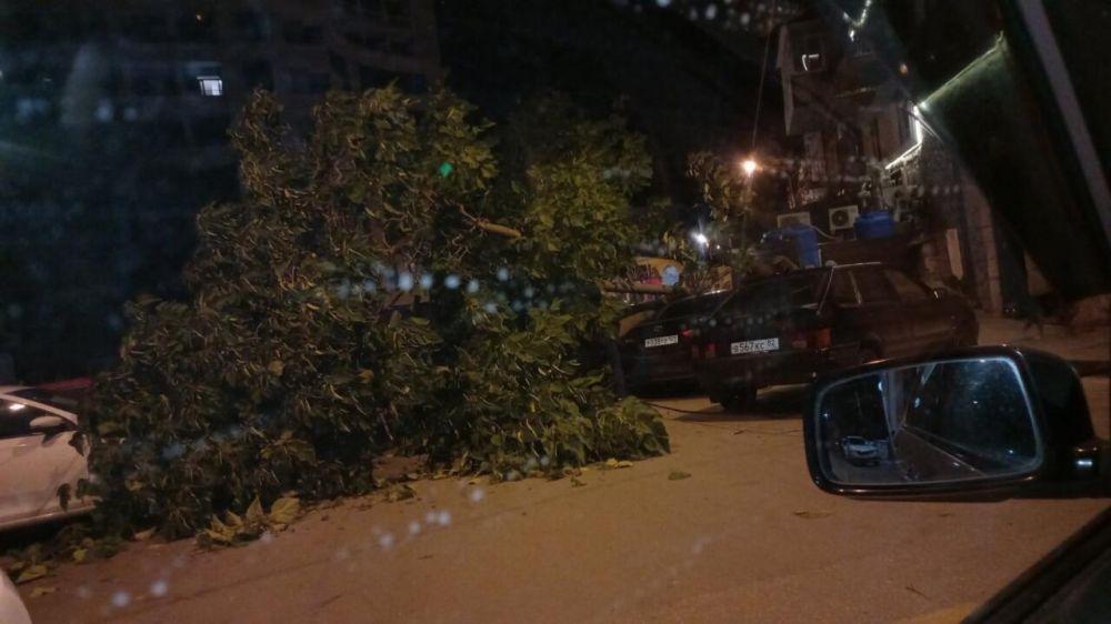В Ялте упавшее дерево раздавило сразу несколько машин